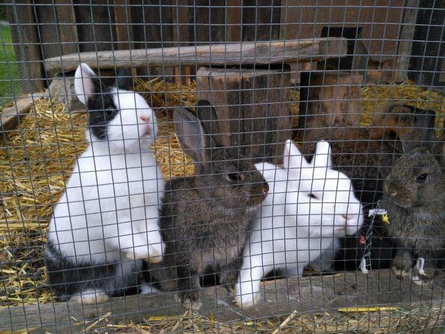 Kaninchen - Freunde für die Kleinen