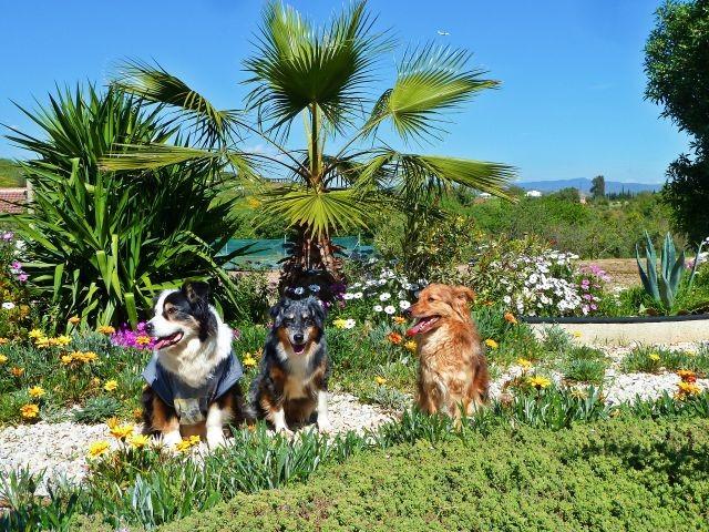 unsere 3 im Garten