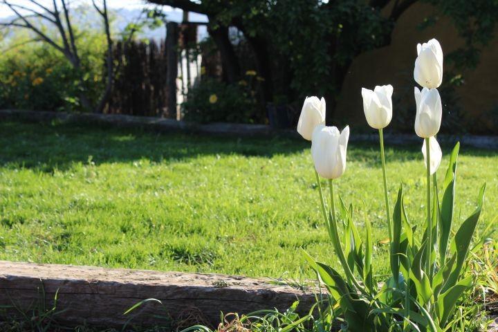 Detail des Gartens