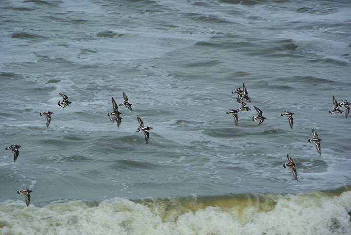 Das Wattenmeer, ein Vogelparadies