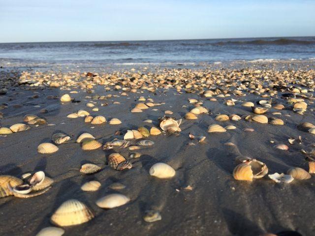 Strand und Muscheln