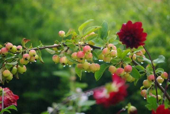 Impressionen aus dem romantischen Garten