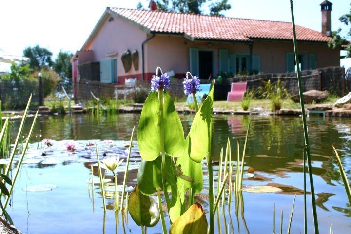 der Bio Teich mit Gästehaus