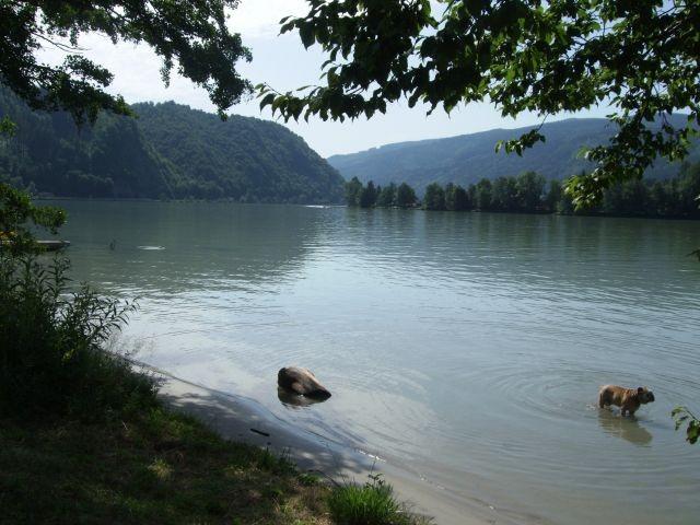 Bademöglichkeit für Hunde an der Donau