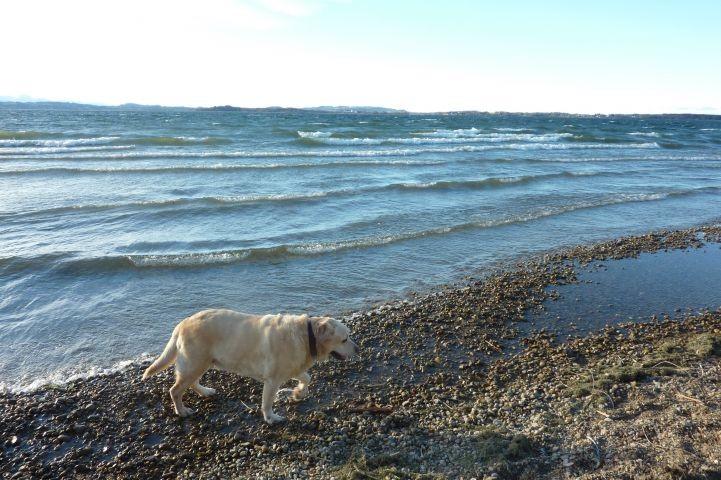 Spaziergang mit Hund am See
