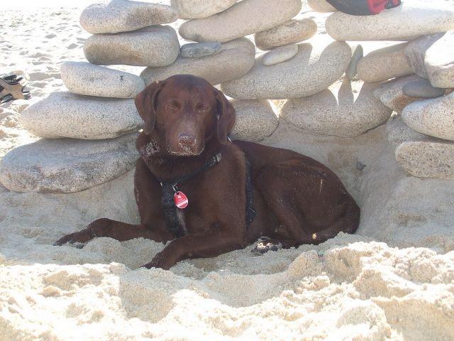 St Marguerite in landeda ist ein Paradies am Meer für Urlauber mit Hunde