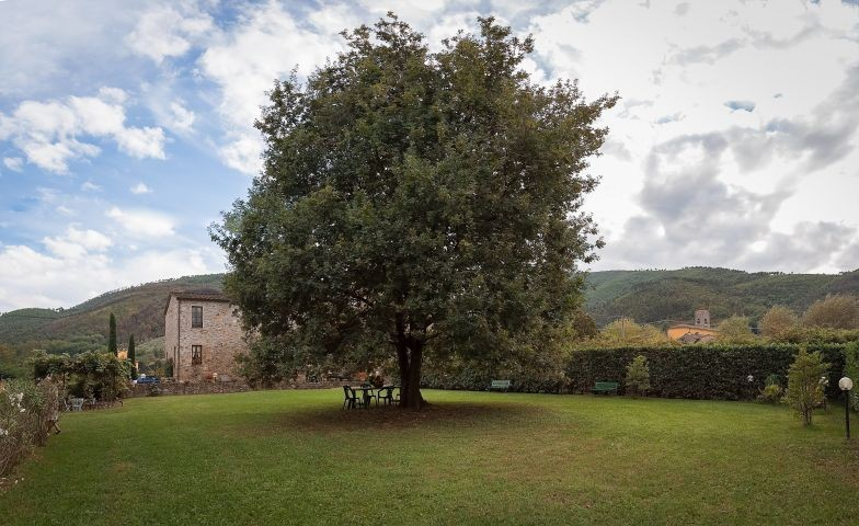Ein Baum mit Sitzgelegenheit