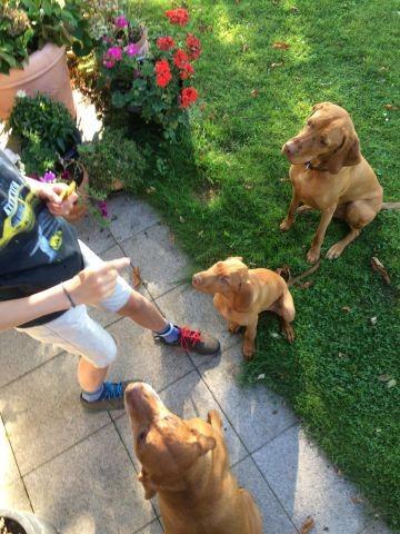 3 Hunde wollen mitkommen? Kein Problem, wir haben den Platz und einen eingezäunten Garten