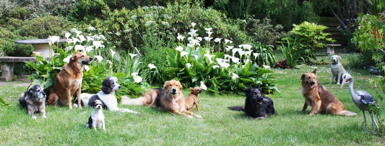 Hunde und Reiher sind glücklich