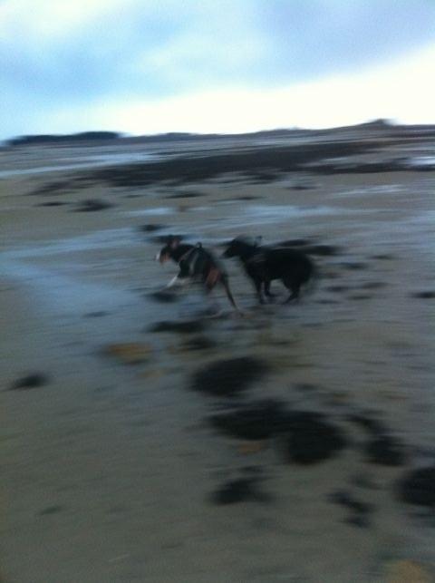 Sprint im Sand