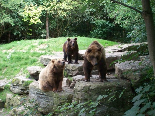 Wildtierpark besuchen