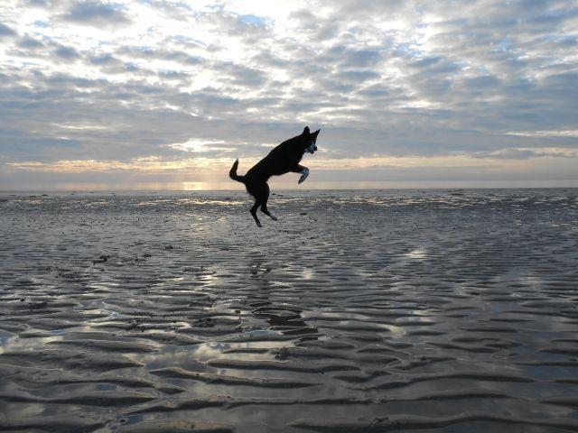 Freiheit am Strand in Winter
