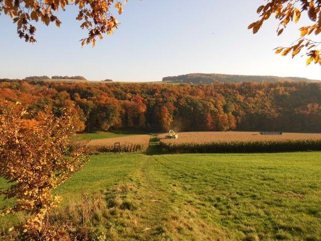 Goldener Oktober - Waldstück in unmittelbarer Nähe vom Haus