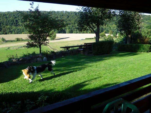 Luxusurlaub für Ihren Hund - ohne Leine spielen und herumtoben!