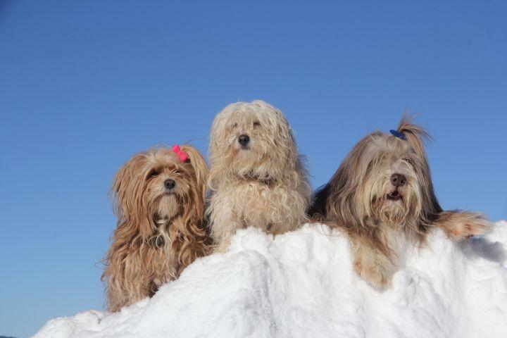 Hunde haben auch Spaß im Winterurlaub im Allgäu