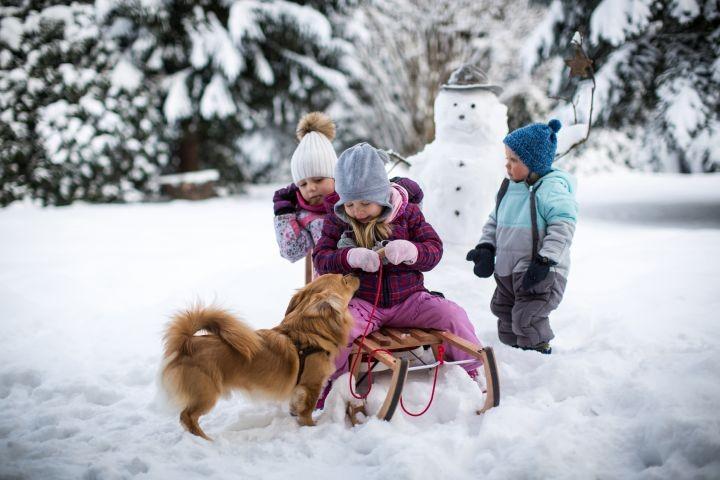 Winterspass mit Hund und Kegel