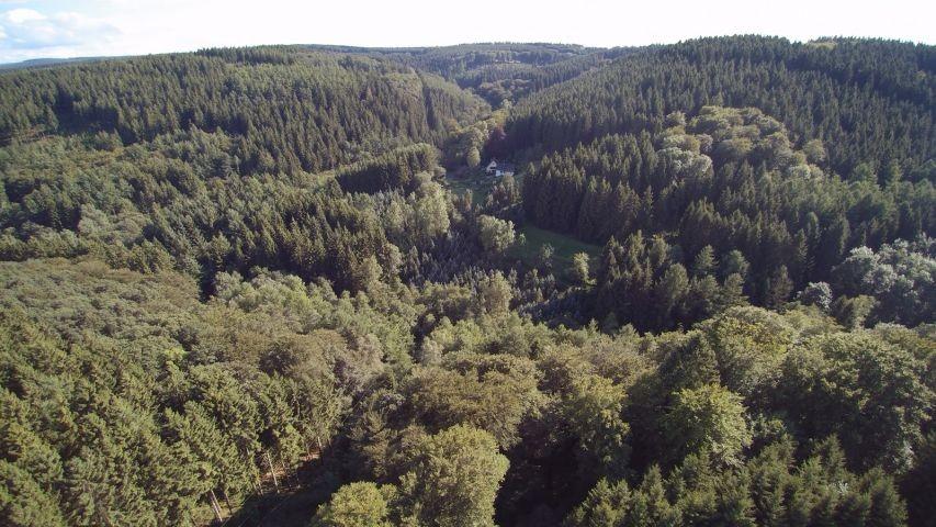 .......mitten im Wald