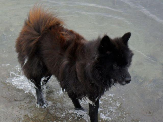 Abkühlung im Ostseewasser