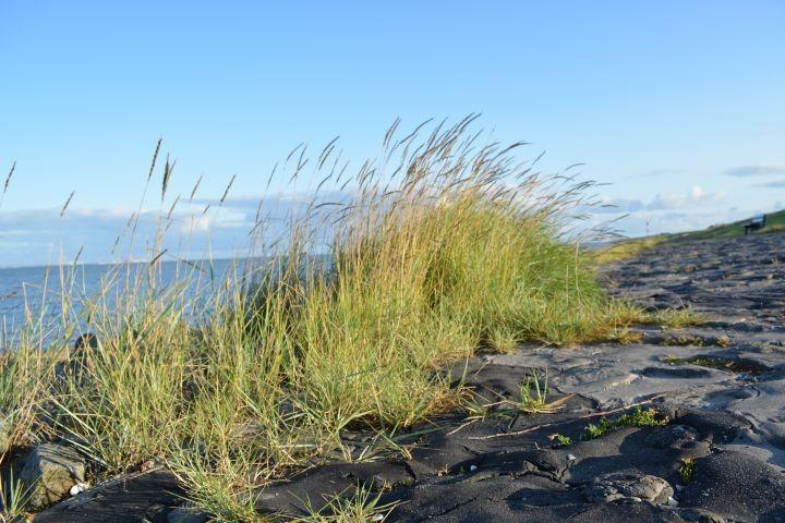 Die Nordsee in nur 300m Entfernung