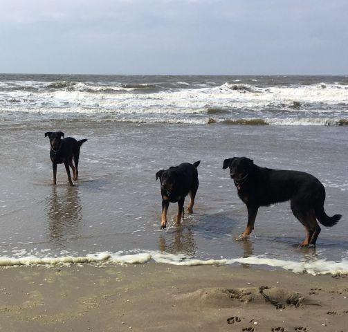 Unsere Hunde am schönen Strand