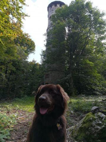 Alteburg Turm