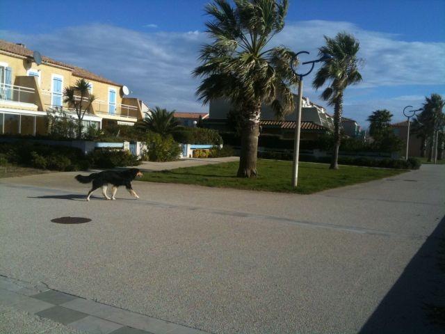 Filou an der Promenade 30 m vom Haus entfernt
