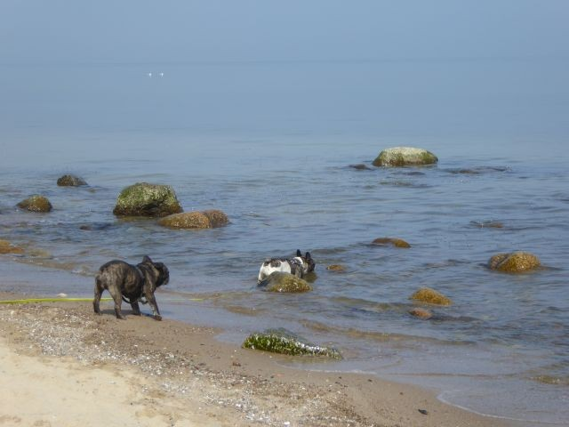 Am Selliner Hundestrand