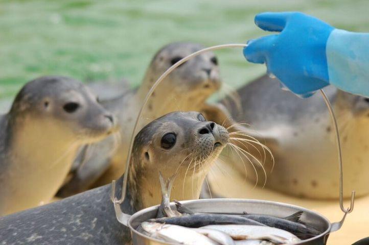 Ausflugsziel: Seehundaufzuchtstation in Norddeich