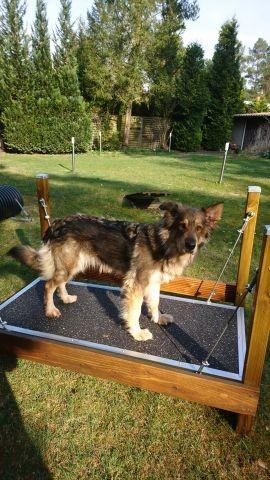 Hunde Trainingsplatz / Wackelbrett