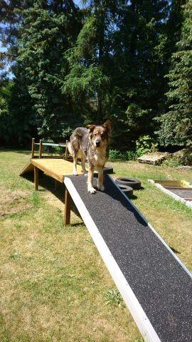 Hunde Trainingsplatz/ Brücke