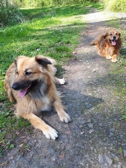 Die Hundedamen Lissi und Nala