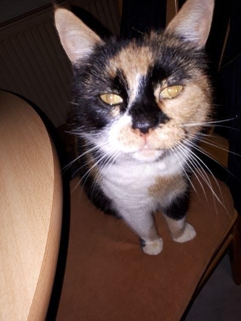 Unser alte Katzedame Maja