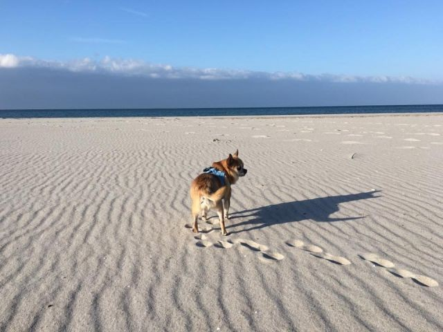 Ostseestrand für Hunde