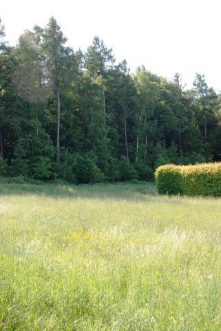 Blick von der Terrasse in den Wald