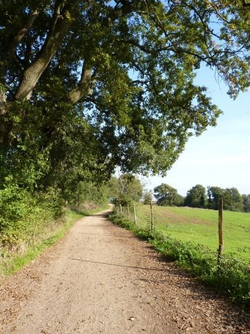 Ein paar Schritte vom Haus entfernt befindet sich ein wunderschöner, ruhiger, verkehrsfreier Spazierweg