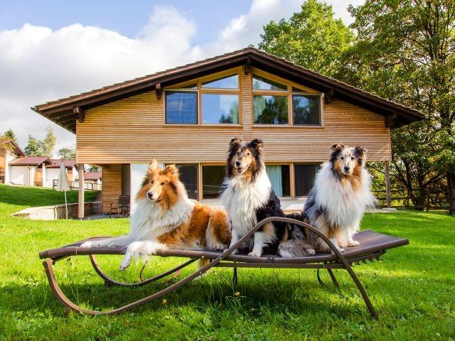 Gasthunde vor einem Panoramablick- Bungalow
