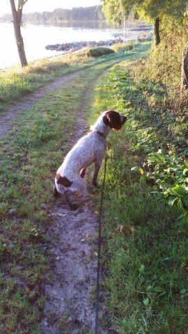 Schönes Naturgebiet mit vielen Möglichkeiten mit einem Hund spazieren zu gehen