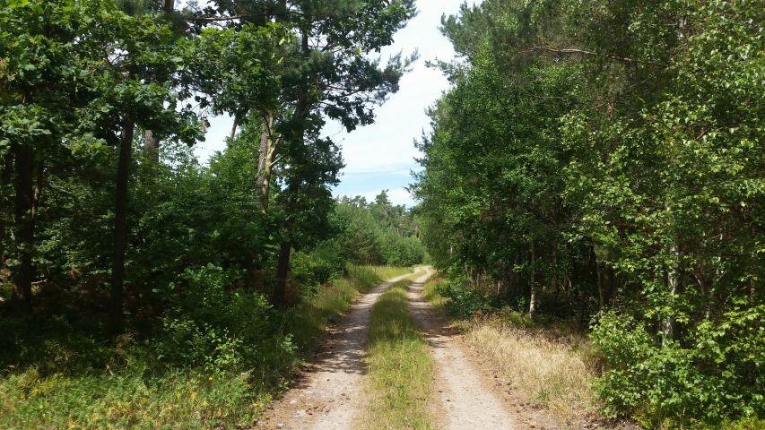 Herrliche Waldwege direkt ab Ferienanlage
