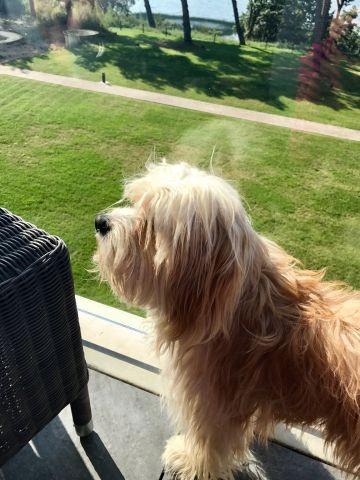 Hund auf Balkon 1
