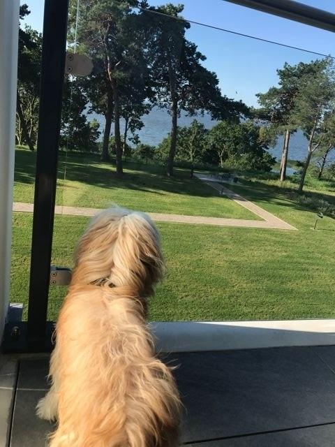 Hund auf Balkon 2