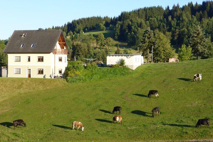 Kühe vor der Tür