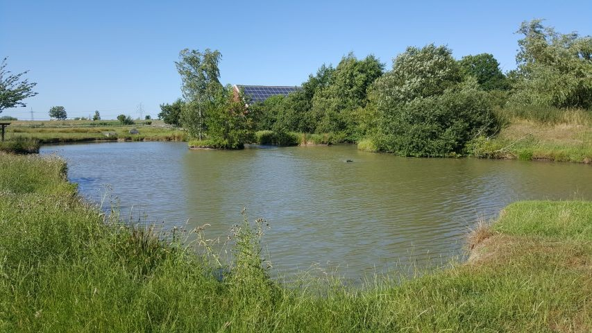 Teich