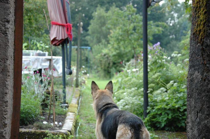 aus dem Hof, in den Garten