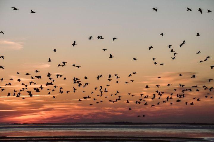 Vogelparadies Wattenmeer
