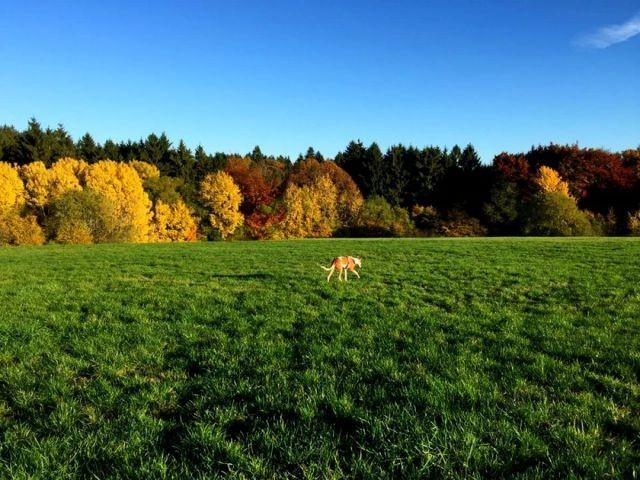 Wiesen und Wälder direkt am Feriendorf