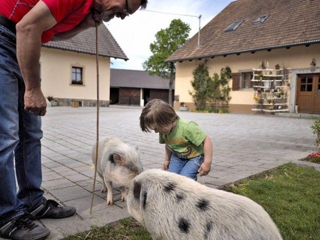 Spaziergang mit Minischweinen Betty und Wilma