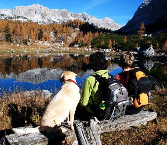 Traumurlaub mit Ihrem Hund in Südtirol