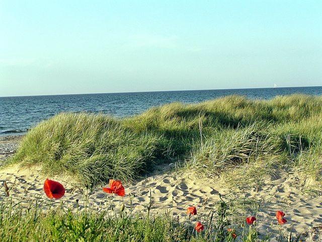 Liebliche Dünenlandschaft im Süden von Kühlungsborn (ideal für lange Spaziergänge)