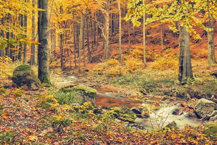 Der Harz im Herbst.