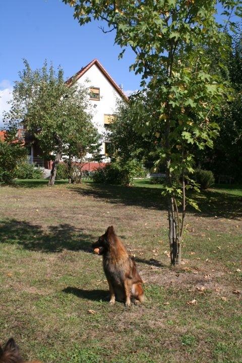 """Haus """"Ahorn"""" vom Garten aus"""